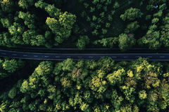 Rue entre de grands arbres à partir de dessus avec la vue aérienne de bourdon, paysage images stock