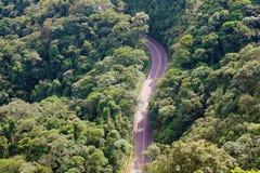 Rue entre les arbres dans la vue aérienne de forêt de ci-dessus, crête de Jaragua, Brésil