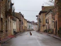 Rue et chien Photographie stock