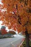 Rue suburbaine avec des feuilles d'automne sur des arbres arquant au-dessus du cadre Images libres de droits