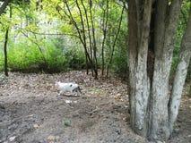 Rue vide au jardin gentil et confortable au matin photographie stock libre de droits