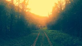 Rueau forêt, après Midi Royalty-vrije Stock Foto's