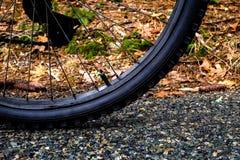 Rueda de bicicleta Fotos de archivo