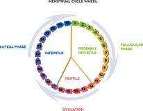 Rueda del ciclo menstrual Fotografía de archivo