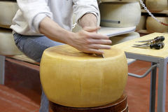 Rueda del queso Imagen de archivo libre de regalías