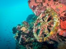 Rueda en el naufragio subacuático, Indonesia fotos de archivo