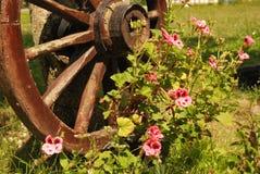 Rueda y flores de madera viejas Foto de archivo