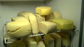 Ruedas del queso en los estantes en fábrica de la lechería almacen de video
