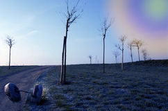 Ruedas y árboles abandonados Imagenes de archivo