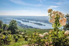 Ruedesheim im Rheingau Stockbilder