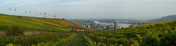 Ruedesheim vineyard Stock Image