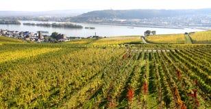 Ruedesheim vineyards Royalty Free Stock Photography