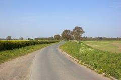 Ruelle anglaise de pays avec des chênes Images stock
