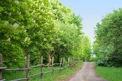 Ruelle avec des arbres de châtaigne Photos libres de droits
