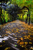 Ruelle avec les lames en baisse en stationnement d'automne Photographie stock libre de droits