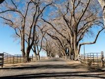 Ruelle bordée d'arbres Photo stock