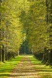 Ruelle d'arbre photographie stock