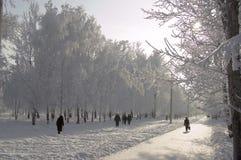 Ruelle d'arbres de bouleau de l'hiver Image stock