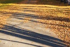 Ruelle d'automne photographie stock