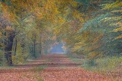 Ruelle d'automne avec des arbres de hêtre avec les feuilles colorées image libre de droits