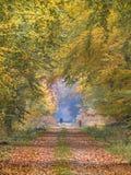 Ruelle d'automne avec le hêtre très haut images libres de droits