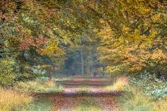 Ruelle d'automne avec les feuilles jaunes et oranges de hêtre images libres de droits