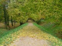 Ruelle dans l'automne Photographie stock