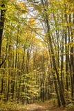 Ruelle dans la forêt Photos stock
