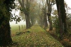 Ruelle dans le brouillard Photographie stock libre de droits
