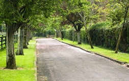 Ruelle dans les jardins japonais image libre de droits