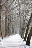 Ruelle de l'hiver dans le soleil d'après-midi Photographie stock