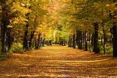 Ruelle de limette dans l'automne Photo libre de droits