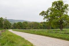 Ruelle de pays menant par le pré vert en Irlande Photographie stock libre de droits