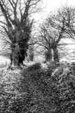 Ruelle de pays - Norfolk Photo stock