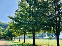 Ruelle des arbres à la ferme photo stock