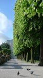 Ruelle des arbres Photographie stock libre de droits