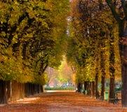 Ruelle des arbres en automne Images libres de droits