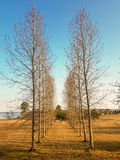Ruelle des arbres sans feuilles image libre de droits