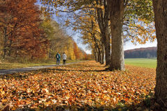 Ruelle en automne Photos libres de droits