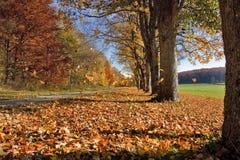 Ruelle en automne Photographie stock