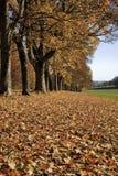 Ruelle en automne Photos stock