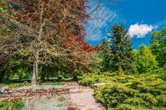 Ruelle en pierre, voie, manière dans le jardin Arbres verts, jardin de buissons au printemps Images stock