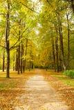 Ruelle en stationnement d'automne photo stock