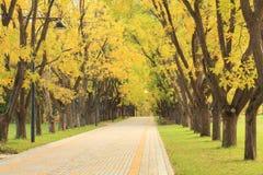 Ruelle en stationnement en automne Photographie stock libre de droits