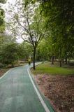 Ruelle verte de vélo en parc Photos stock