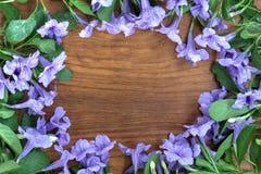 Ruellia op houten raad Stock Afbeelding