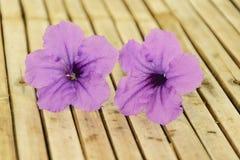 Ruellia tuberosa flower Stock Photo