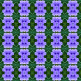 Ruellia-tuberosa Linn in voller Blüte nahtlos vektor abbildung