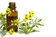 Rueniederlassung mit Blumen und einer Flasche ätherischem Öl lokalisierte O lizenzfreie stockfotografie