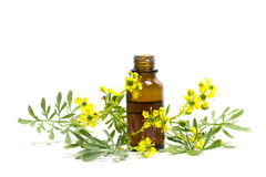 Ruetak met bloemen en een fles geïsoleerde etherische olie Stock Foto
